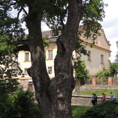 09 krásný strom