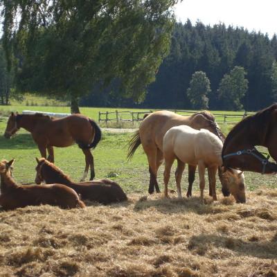 bezděkovskou dominantou jsou koně