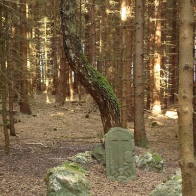co skrývá les