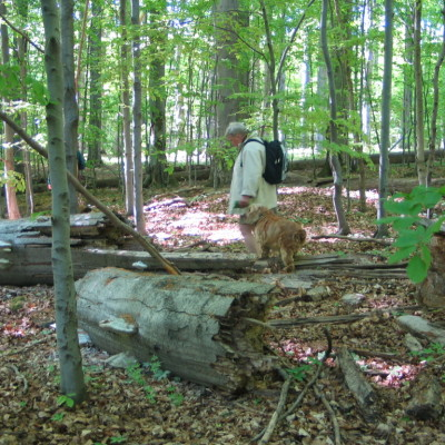 prales V Klučí
