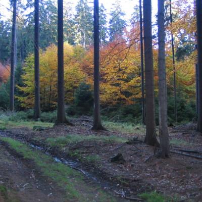 10 podzimní les