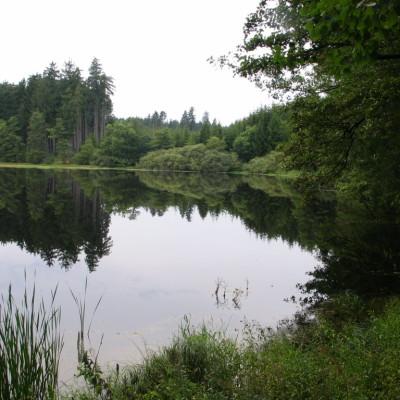 12 - rybník v lesích