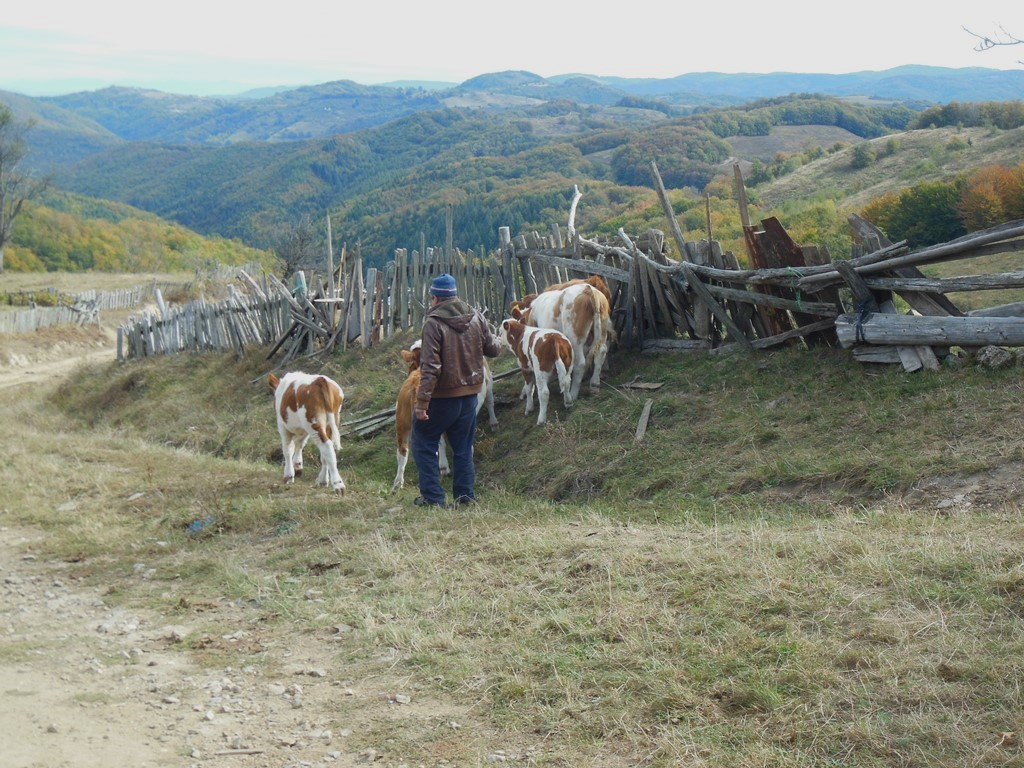 Cestou na pastvu