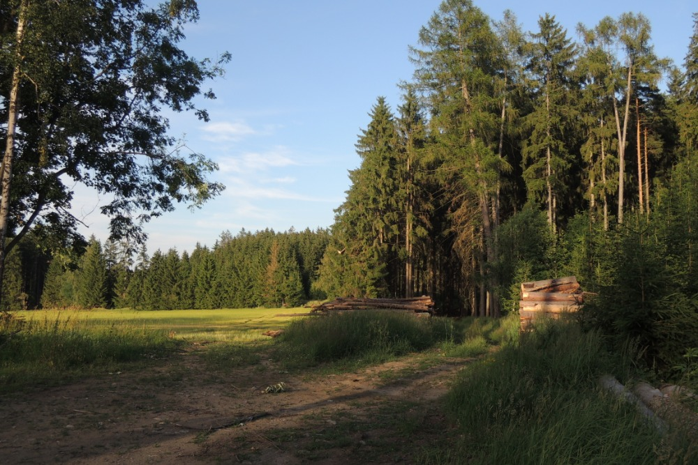 Místo u lesa