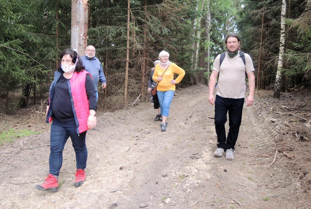 Cesta ve vykáceném lese